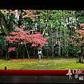 【京都紅葉】大徳寺。高桐院 2012