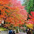 【京都紅葉】曼殊院 2012