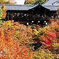 【京都紅葉】東福寺2009