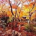 【京都紅葉】洛西。勝持寺 2014