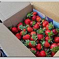 2012-12-31 跨年。善化大安草莓園