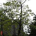 2007/04/25高雄寫真之旅-非專業人士part1