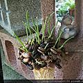 水耕種子盆栽