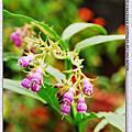 香草植物--康復力