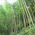 20090111_藤枝森林漫步