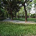 前港公園~~風雨蘭