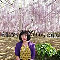 2017日本東京追花行(5/01~5/04)