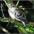 杉林溪鳥類