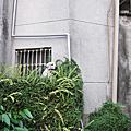20110917瑠公圳
