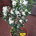 2007新春花卉