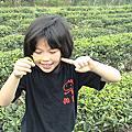 文山農場採茶趣