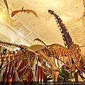 [台北-中正區] 土銀展示館。恐龍之旅