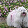 2008-03-08大安森林公園