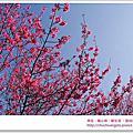 2012.12★桃園★俠雲山莊