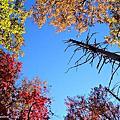 【喵腳印】2010 North Carolina‧北卡的秋天