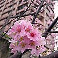 新北市賞花