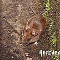 Mammals of Taiwan.