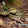 Reptiles of Japan.