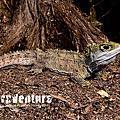 Reptiles of New Zealand.