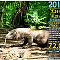 2014科莫多群島深度生態遊 暑假團