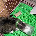 貓咪意外篇:小心貓咪卡在罐子裡