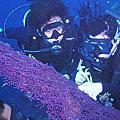 菲律賓宿霧潛水