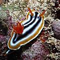 2013.09 Dive in Mactan, Cebu