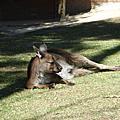 澳洲逃亡記-疏芬園