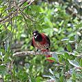 遇見林鳥 2015