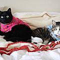 我的兩隻貓咪寶貝