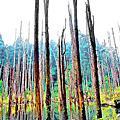 【南投】迷霧幻境--忘憂森林