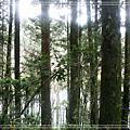 2009-07-04水漾森林