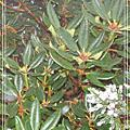 2006-12玉山