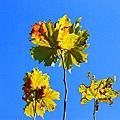 澳洲拍的花草