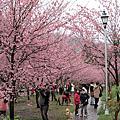 100.02.19-02.20「春遊武陵賞櫻之旅」