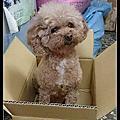 迎賓犬 朵拉 Dora