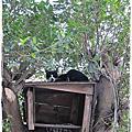 猴硐瘋貓趣2010/12/24、27