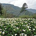 20.油羅溪森林花園 (2012.04.07)