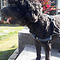 犬用整腸乳酸菌果凍條