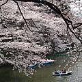 2009桜の旅