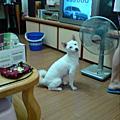 yuki 狗狗