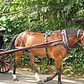 五月新加坡之旅 2006