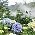 2019.05.04_陽明山竹子湖_花與樹繡球花園