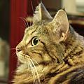 2008八月份貓兒們