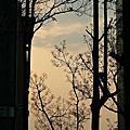 20120404台中草悟道