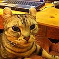 家有寶貝貓