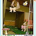 ▌小兔子▌跳跳跳▌