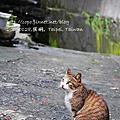 20090128侯硐貓