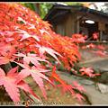 2008.11.15高雄神護寺楓葉