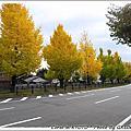 11月京都隨手拍